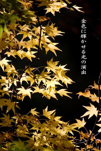 11月25日 金色に輝く光の演.jpg