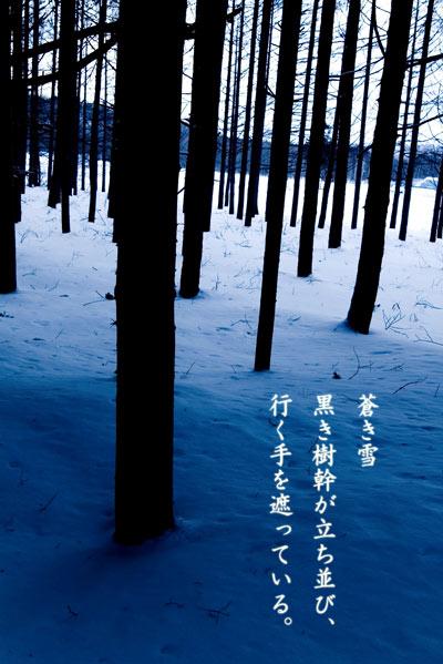 11月29日 スノーシュー6.jpg